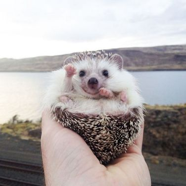 cute-hedgehogs-67__700